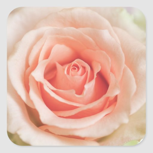 Peach Pink Rose Background Customized Template Stickers