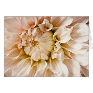 Peach Pink White Cream Dahlia Background Cards