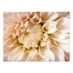 Peach, Pink, White, & Cream Dahlia Background Photographic Print