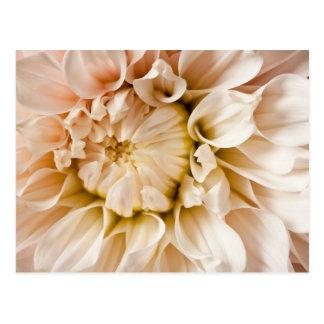 Peach, Pink, White, & Cream Dahlia Background Postcard