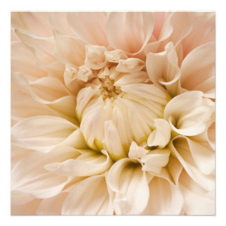 Peach Pink White Cream Dahlia - Dahlias Personalized Announcements