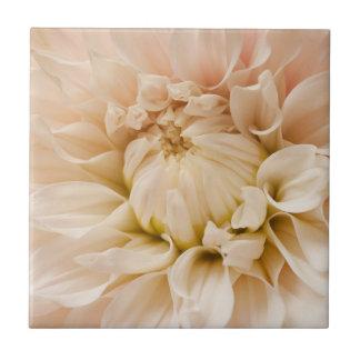 Peach Pink White Cream Dahlia - Dahlias Tile