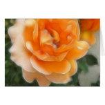 Peach Rose 2 Purity Cards
