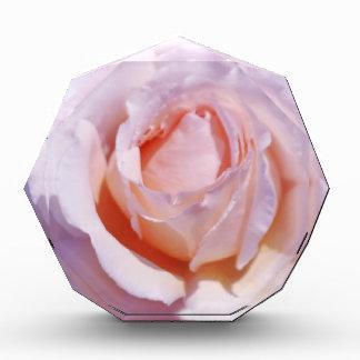 Peach Rose Acrylic Award
