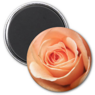 Peach Rose Apricot Roses Flowers Floral Photo Magnet