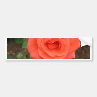 Peach Rose Blossom CricketDiane Bumper Sticker
