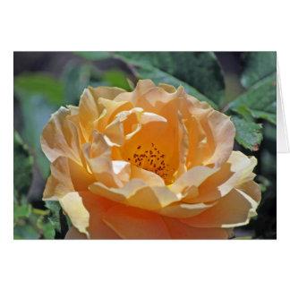 Peach Rose Card