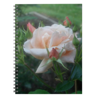 Peach Rose Flower Nature Notebook