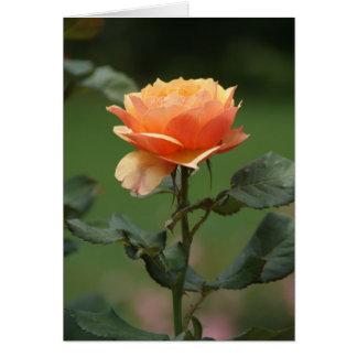 peach rose friendship card