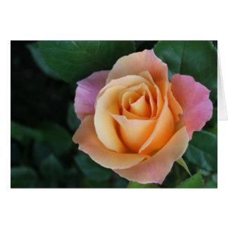 Peach Rose Notecard