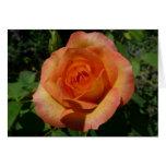 Peach Rose Orange Floral Card