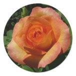 Peach Rose Orange Floral Classic Round Sticker