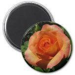 Peach Rose Orange Floral Magnet