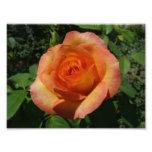 Peach Rose Orange Floral Photo Print