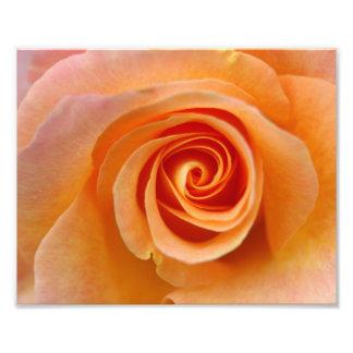 Peach Rose Photo Art