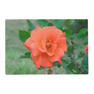 Peach rose placemat