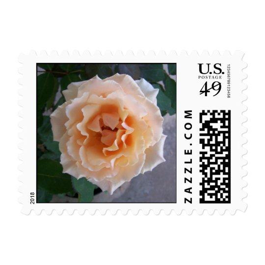 Peach Rose Postage