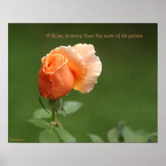 Peach Rose Poster: ROSE & PROSE 20x16 Poster
