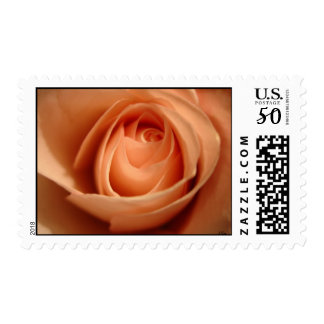 Peach Rose, S Cyr Postage