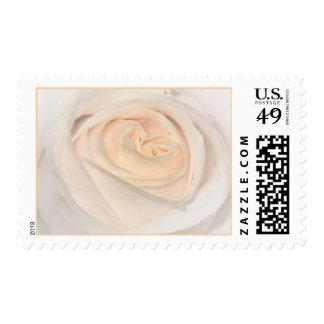 Peach rose stamp