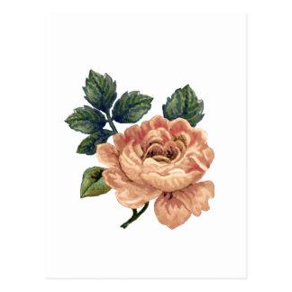 Peach Rose - Vintage Makeover. Postcard
