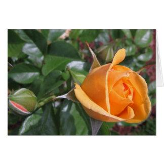 Peach Rosebud Greeting Cards
