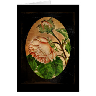 Peach Roses Botanical Image Card