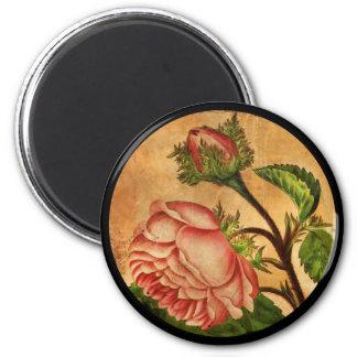Peach Roses Botanical Image Magnet