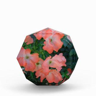 Peach Roses Girly Pretty Design Award