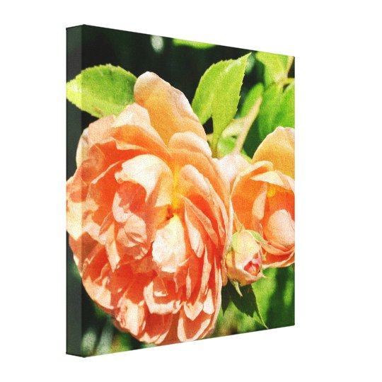 Peach Roses in the Garden Canvas Print