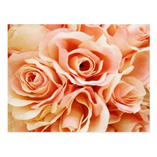 Peach Roses Photo Postcard