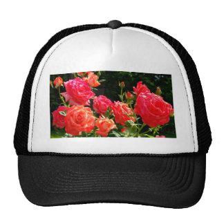 Peach Roses Trucker Hat