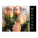 Peach Roses Wedding Save the Date Postcard