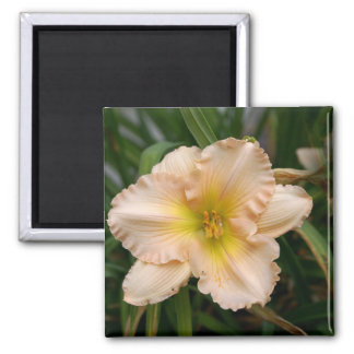 Peach Ruffled Lily 2 Inch Square Magnet