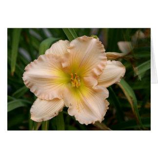 Peach Ruffled Lily Card