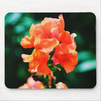 Peach Snap Dragon Mouse Pad