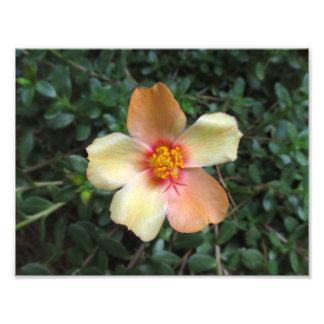 Peach Succulent Flower Photo 8.5 x 11