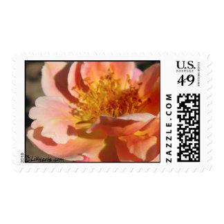 Peach Sunset Rose Wedding Postage