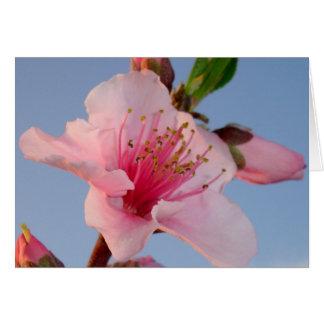 Peach Tree At Dawn Greeting Card