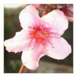 """Peach Tree Blossom 5.25"""" Square Invitation Card"""