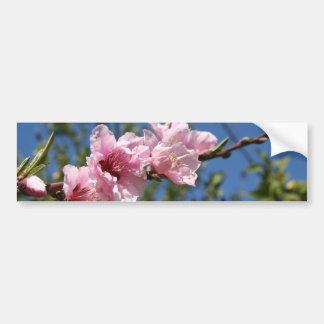 Peach Tree Blossom Against Blue Sky Bumper Stickers