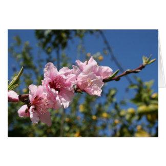Peach Tree Blossom Against Blue Sky Greeting Card