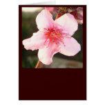 Peach Tree Blossom Cards