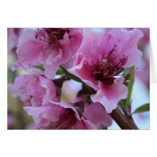 Peach Tree Blossom Close Up Greeting Card
