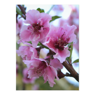 Peach Tree Blossom Close Up Invitations
