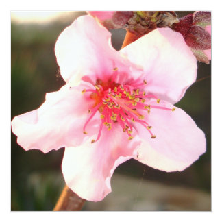 Peach Tree Blossom Personalized Announcements