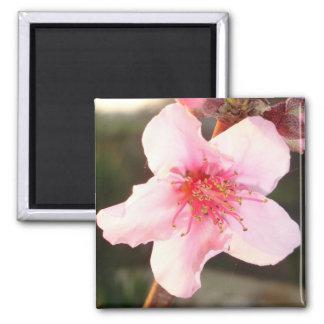 Peach Tree Blossom Magnet