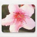 Peach Tree Blossom mousepads