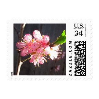 Peach Tree Blossom Postage