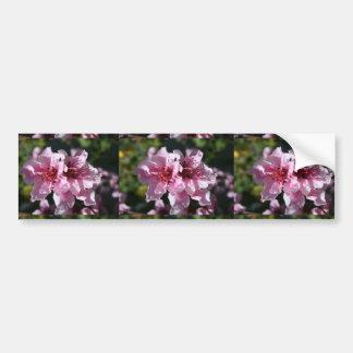 Peach Tree Blossom With Garden Background Bumper Sticker